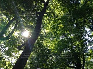空,森林,太陽,日光,木漏れ日,樹木,新緑,眩しい