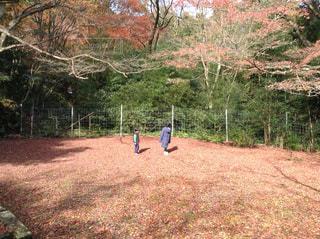 子ども,自然,風景,秋,紅葉,もみじ,樹木,地面,絨毯