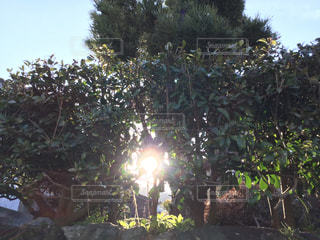木々の隙間からの日光の写真・画像素材[3056219]