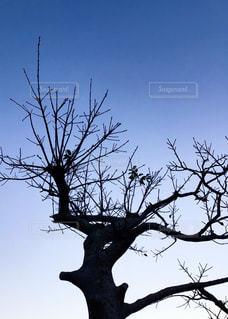自然,空,夜,木,夕方,樹木,コントラスト,草木,キレイ