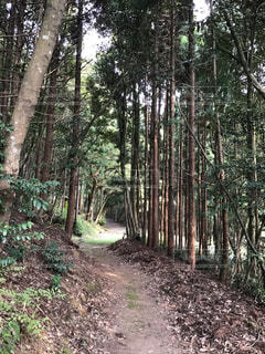 森の中の小道の写真・画像素材[3093957]