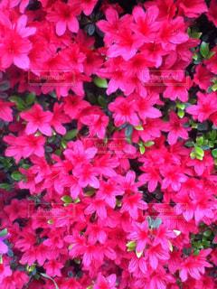 本物の花柄の写真・画像素材[3115599]