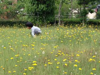 野原で遊ぶ子供の写真・画像素材[3143377]