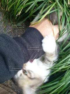 猫,動物,屋外,子猫