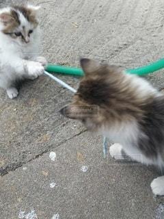 猫,動物,かわいい,子猫