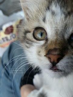 猫,動物,かわいい,子猫,目,ネコ科の動物
