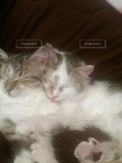 猫,動物,屋内,白,かわいい,寝る,子猫,キティ,ネコ科の動物
