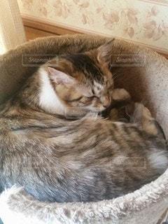 猫,動物,屋内,かわいい,子猫,キティ,ネコ科の動物