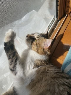 猫,動物,屋内,子猫,ネコ科の動物