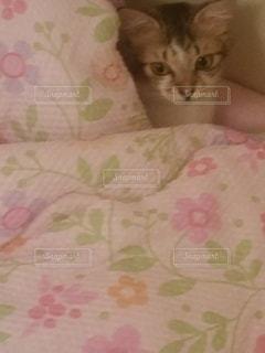 猫,寝る,ベッド