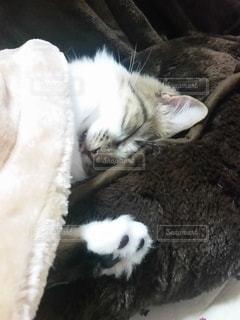 猫,動物,屋内,かわいい,景色,子猫,キティ,ネコ科の動物