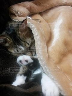 猫,動物,屋内,かわいい,景色,寝る,子猫,キティ