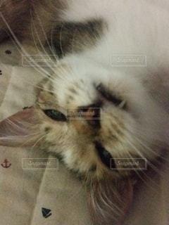 猫,動物,屋内,かわいい,子猫,目,キティ,ネコ科の動物
