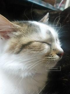 猫,動物,屋内,かわいい,子猫,目,見つめる,キティ,ネコ科の動物