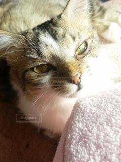 猫,動物,屋内,かわいい,子猫,見つめる,キティ,ネコ科の動物