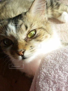 猫,動物,かわいい,景色,子猫,キティ,ネコ科の動物