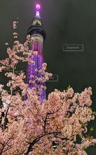 桜,ピンク,スカイツリー,tokyo2020