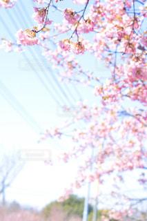 空,花,桜,ピンク,青空,晴天,枝,草木,ブロッサム