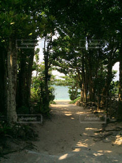 海へあと一歩の写真・画像素材[3106567]