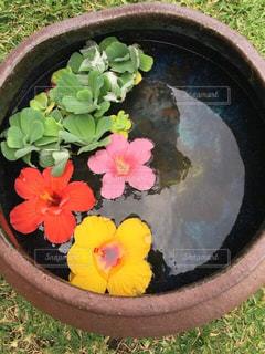 鉢の中の生け花の写真・画像素材[3110181]