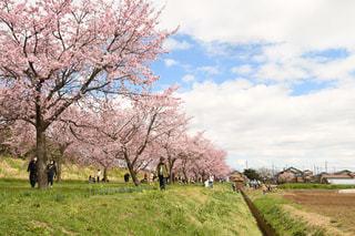 空,花,春,屋外,牧場,景色,草,樹木,草木,3月,桜の花,日中,さくら,日本の風景,ブロッサム