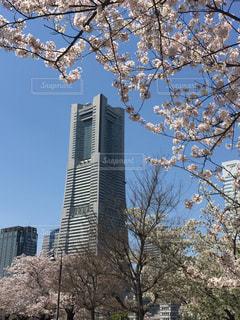 空,春,桜,みなとみらい,ランドマークタワー