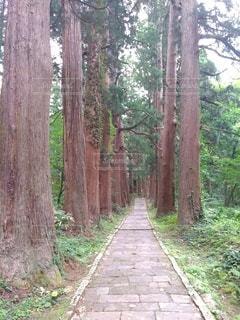 自然,森林,木,緑,山,樹木,日陰,山形,草木