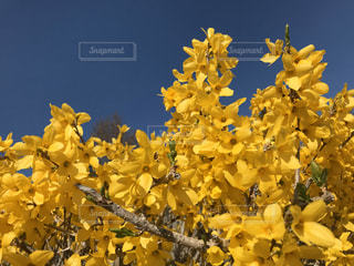 花,春,花束,青空,青,黄色,暖かい,青い,青色,草木