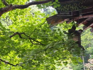 空,屋外,景色,樹木,新緑,草木