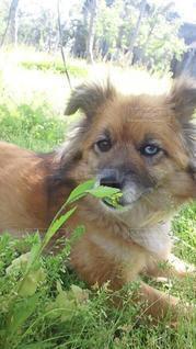 犬,動物,屋外,かわいい,茶色,草,うちの我が犬