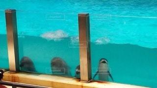 動物,鳥,イルカ,水族館,水面,泳ぐ,スイミング プール