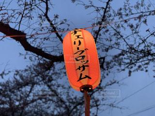 空,春,桜,屋外,夕方,樹木,提灯,チェリーブロッサム