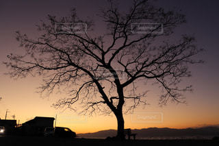 自然,風景,空,木,屋外,夕焼け,夕暮れ,夕方,シルエット,樹木