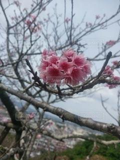 花,春,ピンク,桜の花