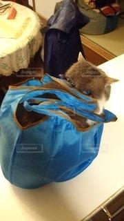 猫,屋内,ショッピングバッグ
