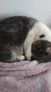 猫,屋内,かわいい