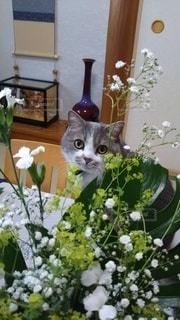 猫,屋内,草木