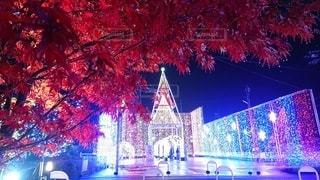 自然,秋,冬,夜,紅葉,夜空,雨,屋外,赤,もみじ,光,イルミネーション,野外,赤い,ひかり