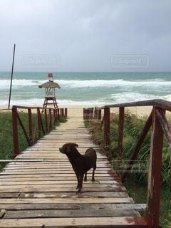 犬,海,橋,ビーチ,波