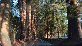 屋外,道路,樹木,道,針葉樹,日中