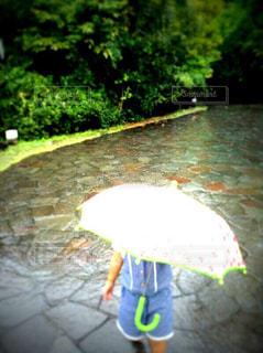 子ども,雨,傘,屋外,水面,草木