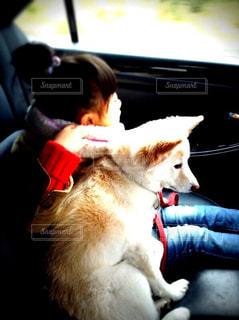 子ども,友だち,犬,動物,ドライブ