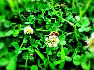 花,屋外,緑,景色,草,新緑,蜂,虫,草木,ガーデン