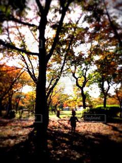 自然,公園,秋,森林,屋外,葉,樹木,草木,カエデ