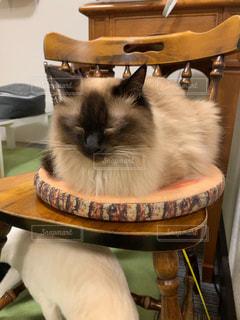 猫,動物,屋内,かわいい,椅子,子猫,猫カフェ