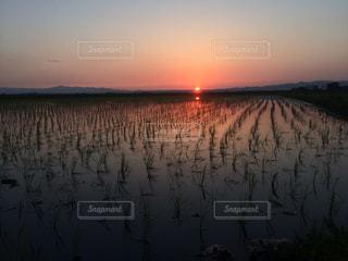 自然,風景,夕暮れ,水面,田んぼ