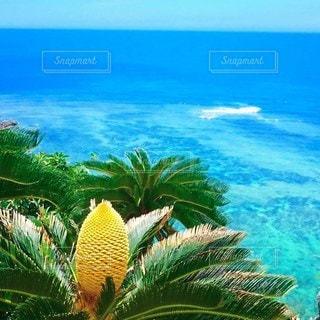 蘇鉄の花と沖縄の海の写真・画像素材[3344639]