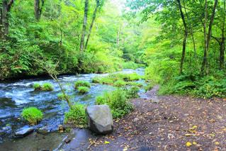森を流れる川の写真・画像素材[3155864]