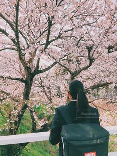子ども,春,桜,屋外,樹木,入学式