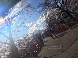 空,桜,橋,屋外,樹木
